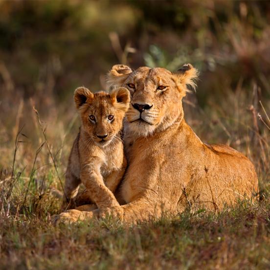 Kenya and Tanzania