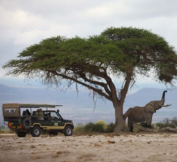 Tortilis Camp Amboseli by Elewana
