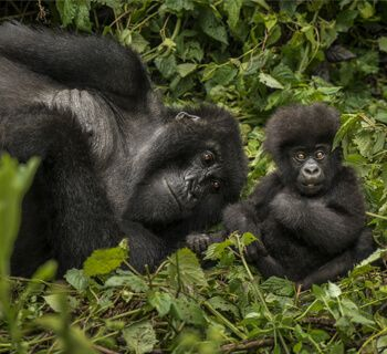 One&Only Gorilla's Nest
