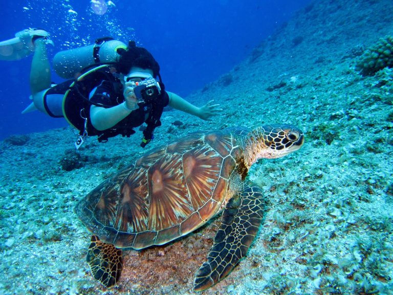 woman scuba diving and taking photo of turtle