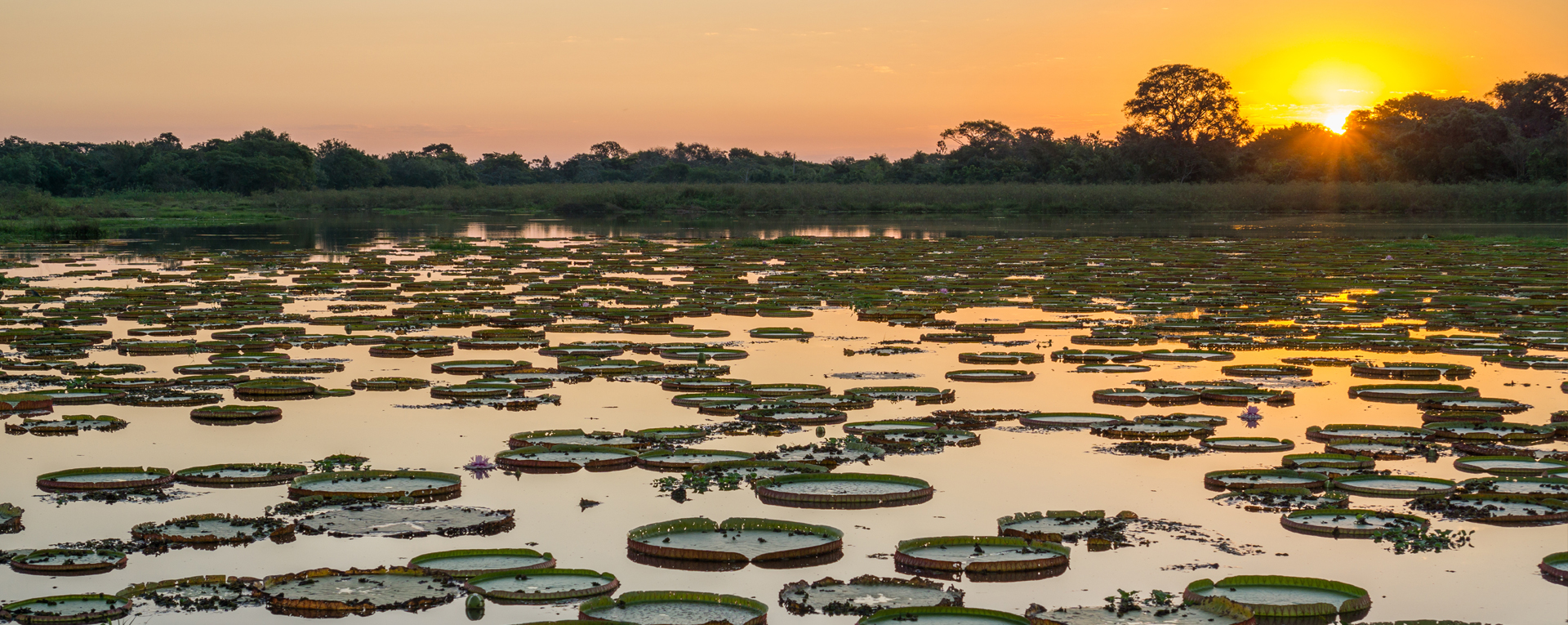 The Pantanal - All the wildlife, less of the trees