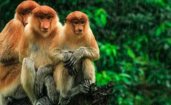 Borneo5